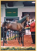 2002 Tattersalls Select Yearling Sale